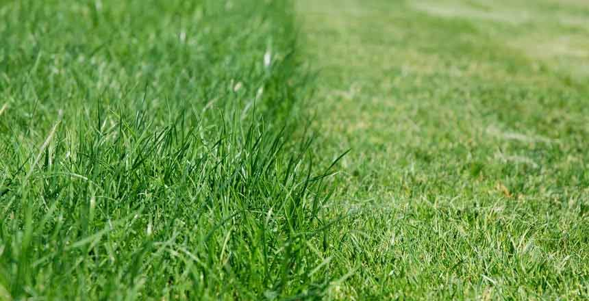 cutting grass for your landscape needs