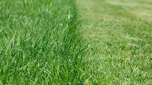 Fredrickson Lawn Fertilizing Services Burnsville MN