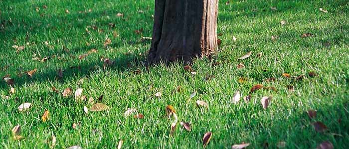 Lawn Care Services in South Metro MN